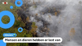 Aziatische landen zitten in de rook door bosbranden