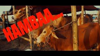 HAMBAA SONG | EID-UL-ADHA | KURBANI NEW SONG 2016