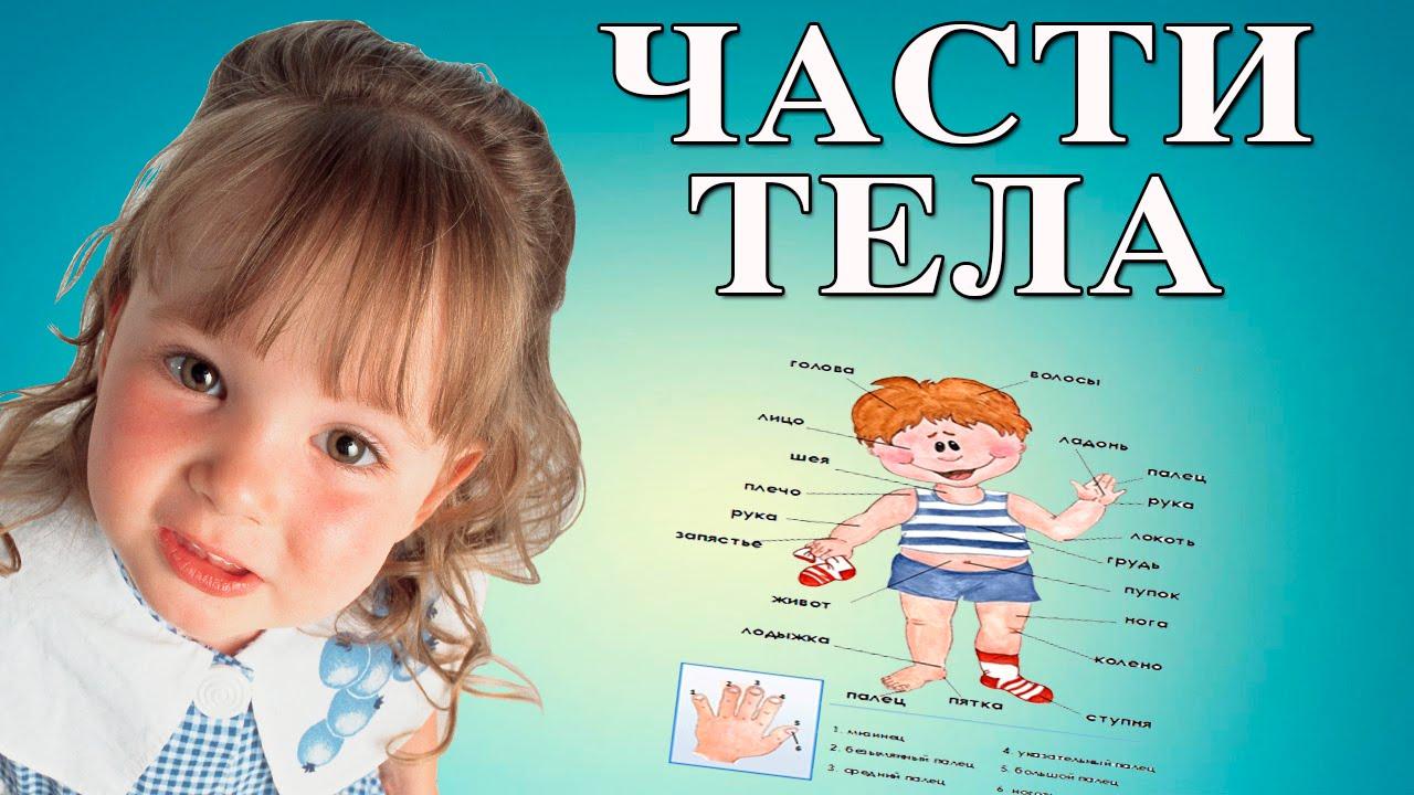 Части тела картинки для детей 6 лет