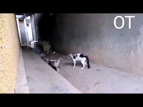 Real Cats Fights ' Its A War'