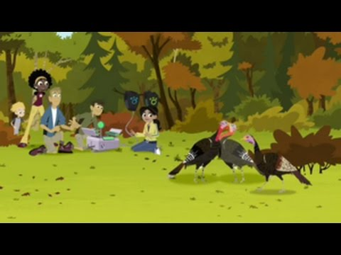Wild Kratts | Wild Turkey