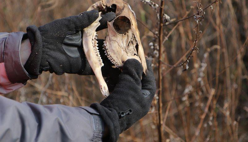 Staten Island dumped on again with dead deer