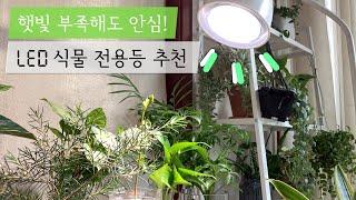 햇빛 안 드는 집에 꼭 필요한 LED 식물 조명 같이 …