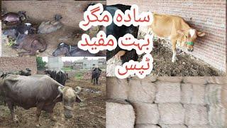 Mixed dairy farm   How to start dairy farm   Dairy farming in Pakistan  Buffalo farming in Pakistan