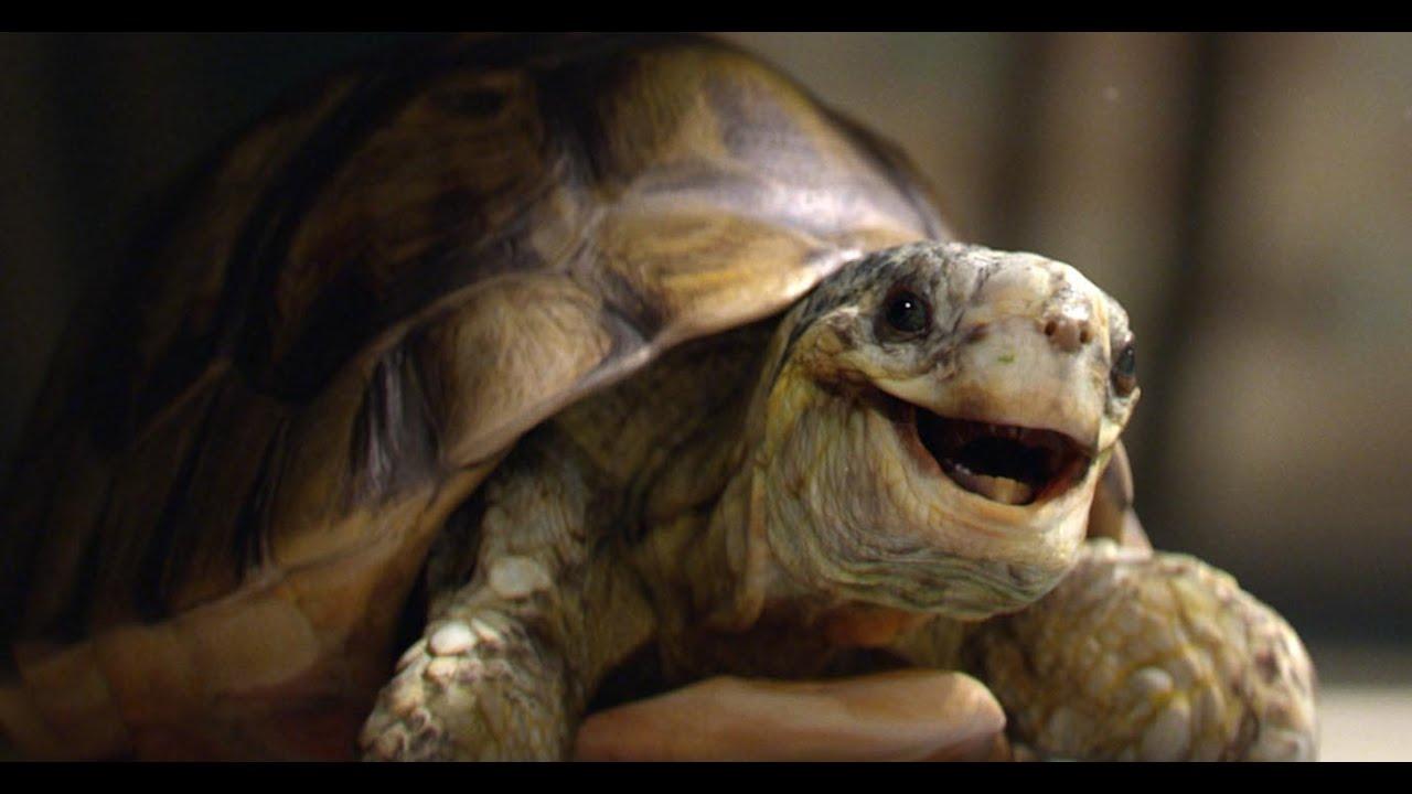 Homebase - Gary the Tortoise