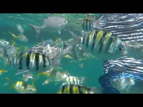 Key West Divings (Short Video)