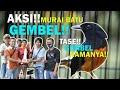 Aksi Murai Batu Gembel Di Launching Juri Ronggolawe Banten Bersama Mr Adim  Mp3 - Mp4 Download