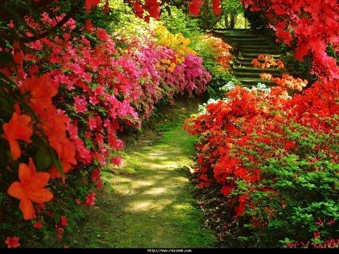 Цветы летнего сада.