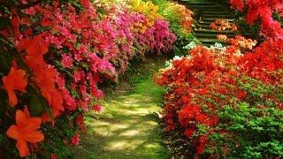 Цветы летнего сада.(Цветы – настоящее украшение сада, которые наполняя его сочными яркими красками, создают неповторимый эффе..., 2015-02-14T12:34:13.000Z)