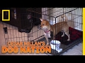 Relaxing a Real Rascal | Cesar Millan's Dog Nation