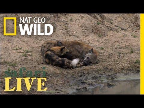 Safari Live - Day 69 | Nat Geo WILD