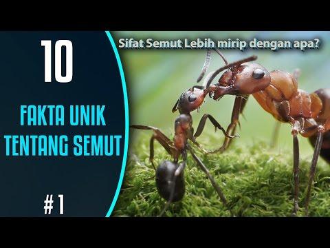 10 Fakta Unik Tentang Semut
