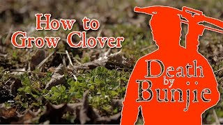 How to Grow a Clover Foodplot for Deer