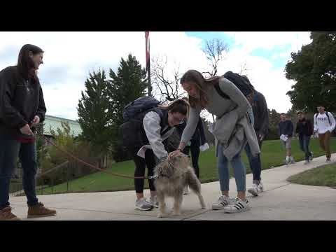 A Day in the Life at The Catholic University of America // Walking the First Dog Gus Garvey