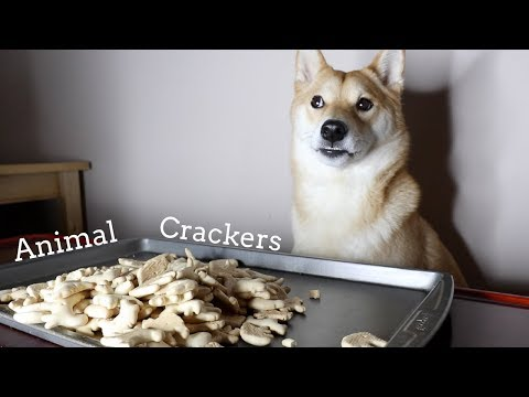 Dog Eats Animal Crackers. [ASMR]