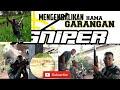 Tumbangnya Sang Predator Berburu Garangan Sniperabalabal Hunting Sniper  Mp3 - Mp4 Download