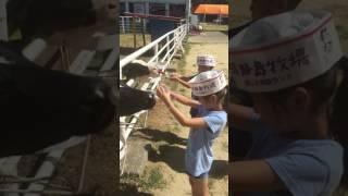 20160807餵小牛飲奶@淡路島牧場
