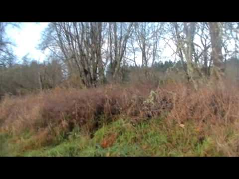 Western Washington Pheasant Hunting Skookumchuck Release Site
