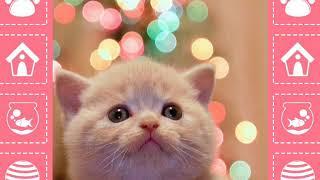 Слайдшоу котята читайте описание