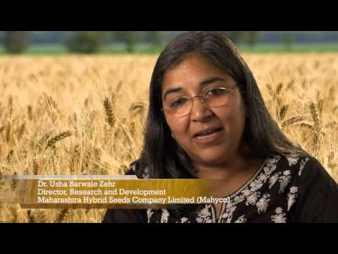 Wheat in India and the Legacy of Dr. Norman Borlaug
