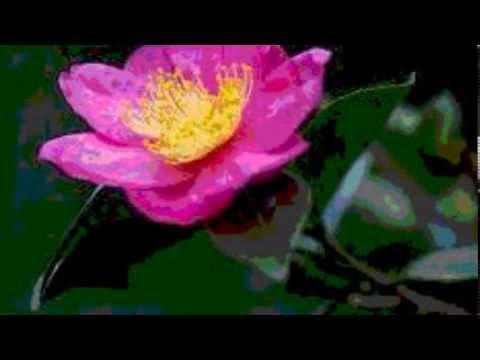 面子太郎 高田美和さんの「青春ロマンチック歌謡」を共に