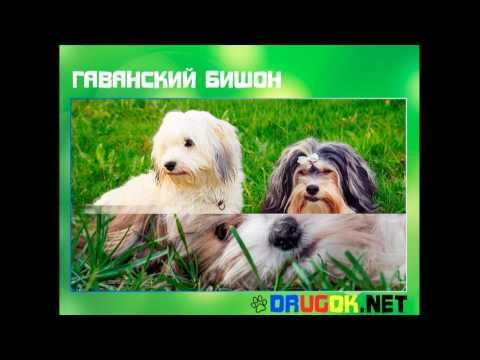 мясо для собак, мясо для собак с доставкой по Москве и