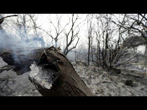 الحرائق تلتهم مساحات واسعة في لبنان وسوريا وسط عجز فرق الإطفاء عن إخمادها  - نشر قبل 2 ساعة