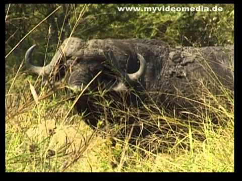 Kruger National Park, from Skukuza to Numbi Gate - South Africa Travel Channel
