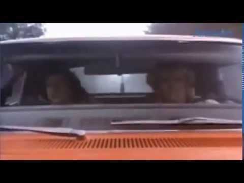 Where Are They Now, The Dukes Of Hazzard