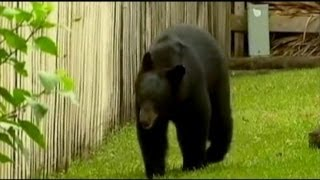 Brutal Bear Attack in Florida
