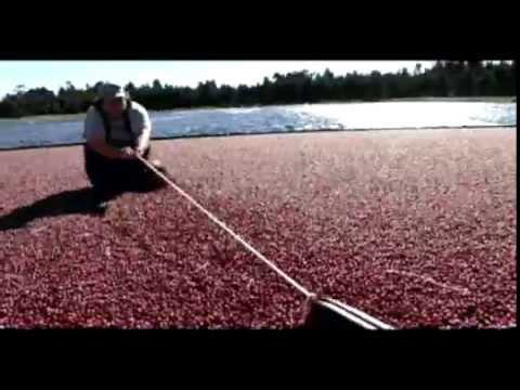 Cranberry Fruit Pump - Oregon Cranberry Growers Association