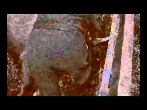 Ryoji Ikeda - LSDS [Mort Aux Vaches]