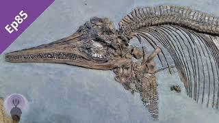 Episode 85: Ichthyosaurs
