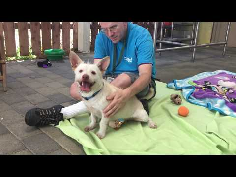 Introducing Badger -  A Lovable, Smart and Playful Terrier Mix