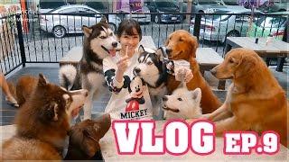 มาเล่นกับน้องหมาตัวใหญ่ ๆ ที่ LoL Dogs cafe' ▶ Misasaki in Wonderland VLOG EP.9