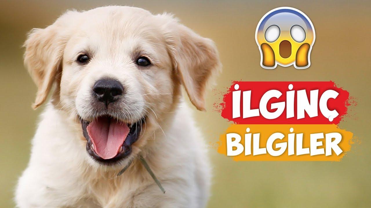 Köpekler Hakkında Ilginç Bilgiler Youtube