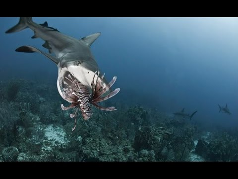 Underwater Killers : Documentary on Hunters and Prey Under the Sea