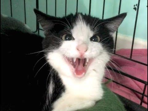 Dante Returns, Big Kitten Hisses & Baby Kittens Crawling Over Each Other - Nursery #13