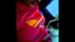 Lucy cat doing massage