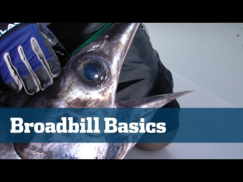 Florida Sport Fishing TV - Daytime Swordfish Tips Tactics