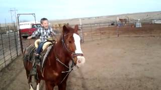3 year old riding a horse like a pro
