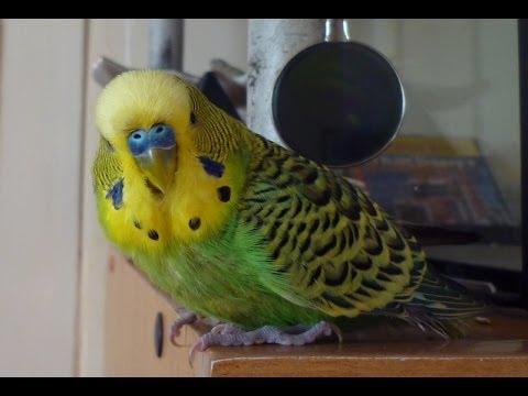 попугаи жгут!!!! смотреть онлайн бесплатно — хорошее