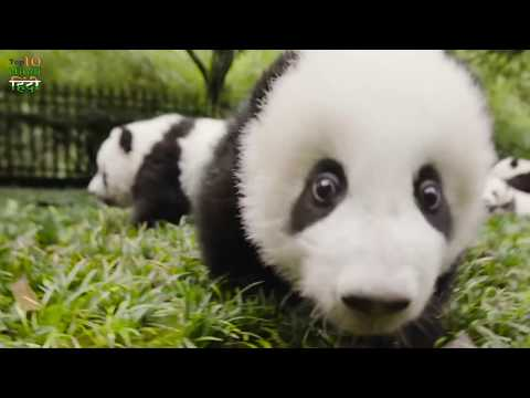 10 Unbelievable facts about Animals that are Actually TRUE | Strange facts you Didn't know