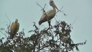 THE AMAZING VILLAGE KOKKAREBELLUR...AN AVIAN HUB