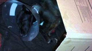 видео Знобит, высокая температура, ломит кости
