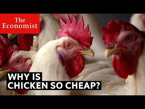Why is chicken so cheap? | The Economist