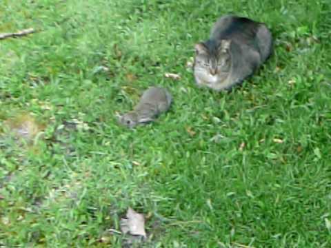 hqdefault - Jeux : la chasse aux lapins