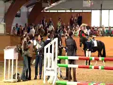 Information movie: how to buy an auction horse?