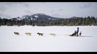 Dog Sledding in Reno Tahoe