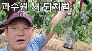 과수원 새 퇴치하는 방법 [농사의신] / Extermination of Orchard Birds